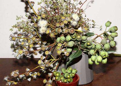 Vier Sorten Eukalyptus